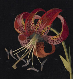 """Fire Lily, detail"" by Mary Delany"
