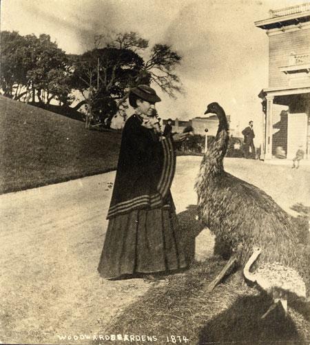 02_ ostrich